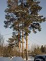 Lyovintsy, Kirovskaya oblast', Russia, 612079 - panoramio (8).jpg