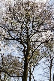 Münster, Wolbeck, Wolbecker Tiergarten, Naturwaldzelle -Teppes Viertel- -- 2014 -- 7099.jpg