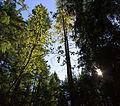 MRNP — Kautz Creek Trail (21878084525) (2).jpg