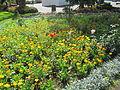 Madeira em Abril de 2011 IMG 1756 (5663204121).jpg