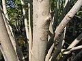 Magnolia x Jane 3zz.jpg