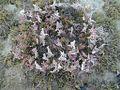 Mangrove at Dhakhira1, Qatar.jpg