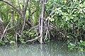 Mangroves of San Juan, Batangas 4.jpg