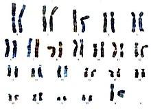 wieviele chromosomen hat ein mensch