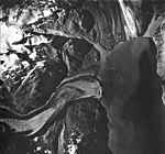 Margerie and Grand Pacific Glaciers, tidewater glacier with wide lateral moraines and hanging glaciers, August 22, 1963 (GLACIERS 5618).jpg