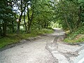 Marquis's Drive, Beaudesert Old Park - geograph.org.uk - 231323.jpg