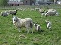 Marramatte Farm. - geograph.org.uk - 1040359.jpg