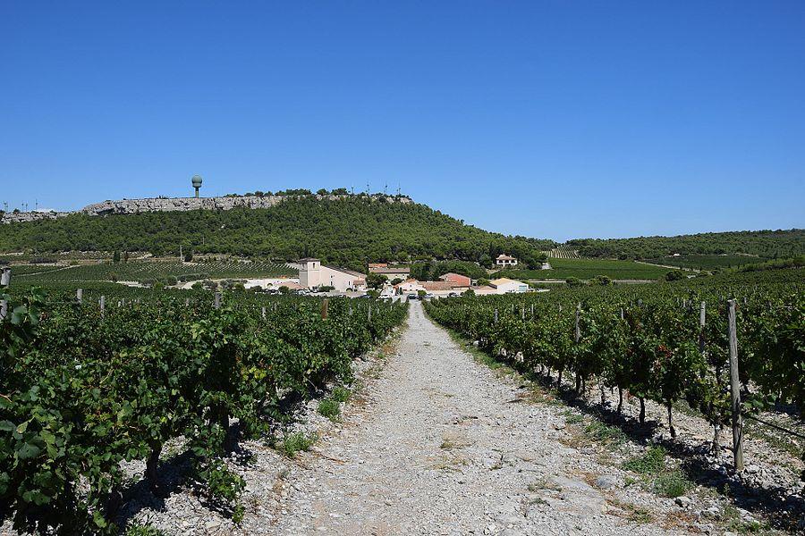 Vineyard in Massif de la Clape, south of France