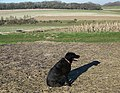 Me and my shadow on Fifield Down - geograph.org.uk - 683182.jpg