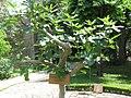 Medieval garden (Perugia) 36.jpg