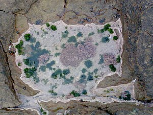 Microclimate - Microclimate on rock located in intertidal zone in Sunrise-on-Sea, South Africa