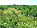 Misk Knowe and Bog Farm.JPG
