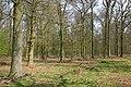 Mixbury Plantation - geograph.org.uk - 393651.jpg