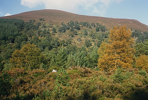 Mixed woodland in the Ryvoan Pass - geograph.org.uk - 887273