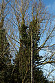 Molehill Green, Essex England - trees and utilty pole.jpg
