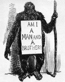 A gorilla standing upright with the aid of a stick, wearing a placard: