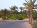 MoroccoMarrakech garden.jpg