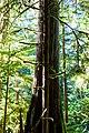 Moss (16483975727).jpg
