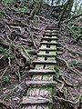 Moss covered ladder in Yakusugi Land.jpg