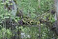 Mossy Tree Roots.jpg