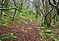 Mossy woodland near Porth yr Ogof - geograph.org.uk - 14624.jpg