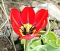 Mount Ara - flower.jpg