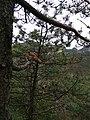 Mount Huangshan–Climbing 06.jpg