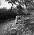 Movja Janez, 84-leten, Fojana, plete zbrenčjo 1953.jpg