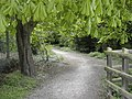 Mudeford Woods - geograph.org.uk - 413515.jpg