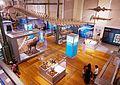 Museo Nacional de Ciencias Naturales 2.jpg