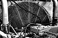 My Fan (64803759).jpeg
