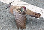 My friend from Runway 19 loop-1+ (1798243950).jpg