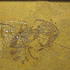 <i>Myrmeciites</i> Extinct genus of ants