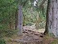 Mythos Wald trail Harz 02.jpg