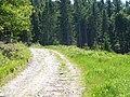 Na szlaku - panoramio (3).jpg