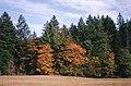 Nanaimo A, BC, Canada - panoramio (9).jpg