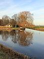 Nationaal Park Weerribben-Wieden. Wilg (Salix babylonica) reflecteert in het water.JPG