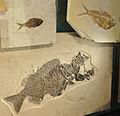 Natural History Museum of Utah (6882555988).jpg