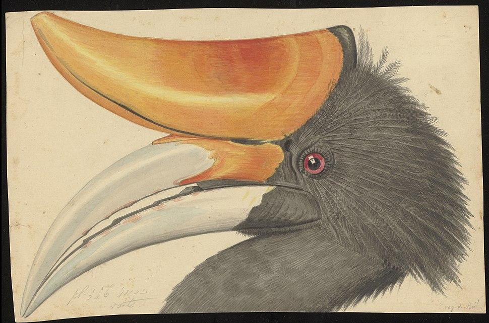 Naturalis Biodiversity Center - MMNAT01 AF NNM001000157 001 - Natuurkundige Commissie voor Nederlandsch-Indi%C3%AB - Bird species - Art