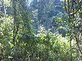Nature 1111111.jpg