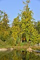 Nature luxuriante (22978576581).jpg