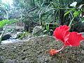 Nature of Langkawi (15).JPG