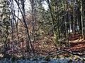 Naturpark Schönbuch - panoramio (11).jpg