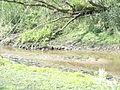 Naturschutzgebiet Heuckenlock 21.05.2014 Phase 80.JPG
