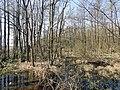 Naturschutzgebiet Ramper Moor im Landschaftsschutzgebiet Schweriner Seenlandschaft im Landkreis Ludwigslust-Parchim (1).jpg