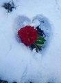 Nepal National Flower Rodhodhodenron in heart shape Snow in Daman.jpg