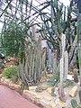Neuer Botanischer Garten Marburg - Sukkulentenhaus 001.jpg