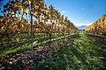 New Zealand - Vineyards - 8981.jpg