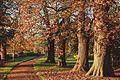 Nonsuch Park - Surrey - 6 December 2014.jpg