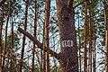 Numbered Tree.jpg